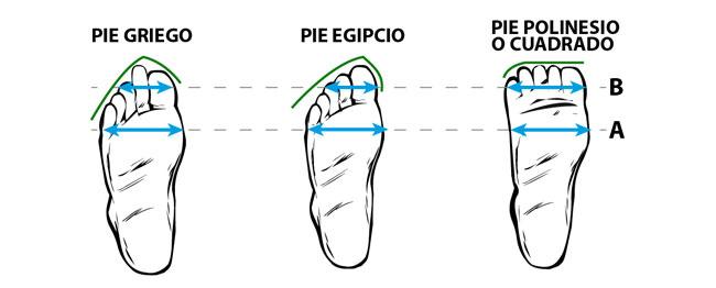 Morfología del Pie